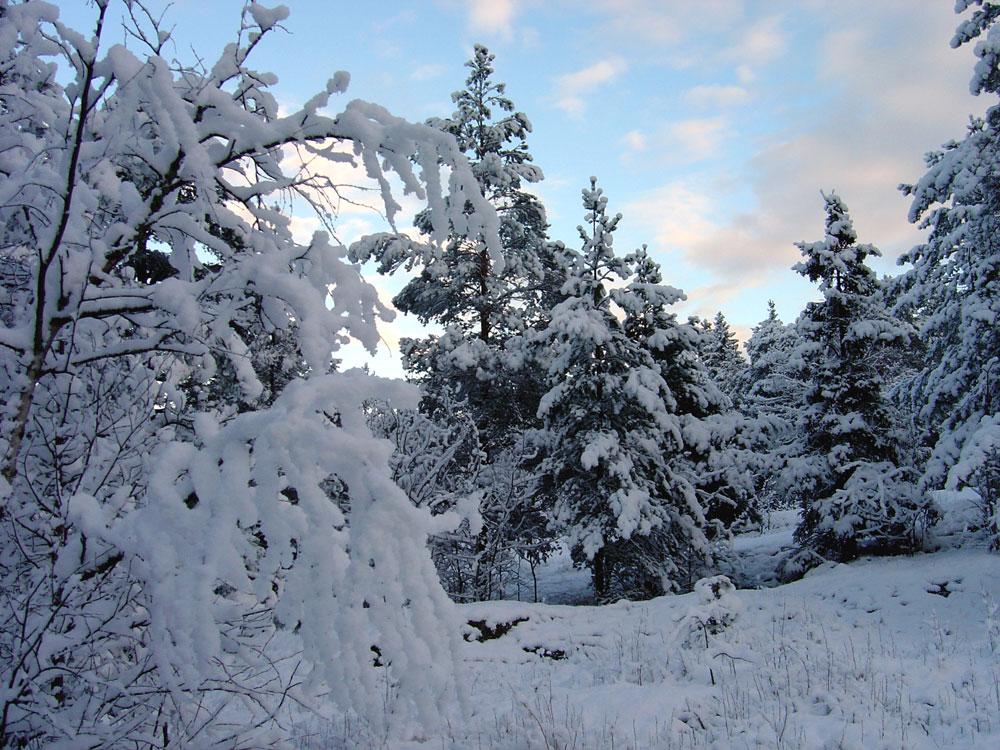 Keskuspuisto talvi