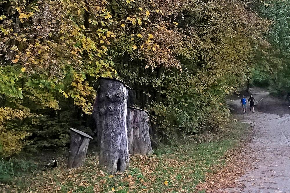 Kun erakkokuoriaisen asuttamat puut jouduttiin kaatamaan, tehtiin rungon osista kuoriaisille katoilla varustetut kodit, jotka sijoitettiin metsän reunaan. Kuva: Kaarina Heikkonen